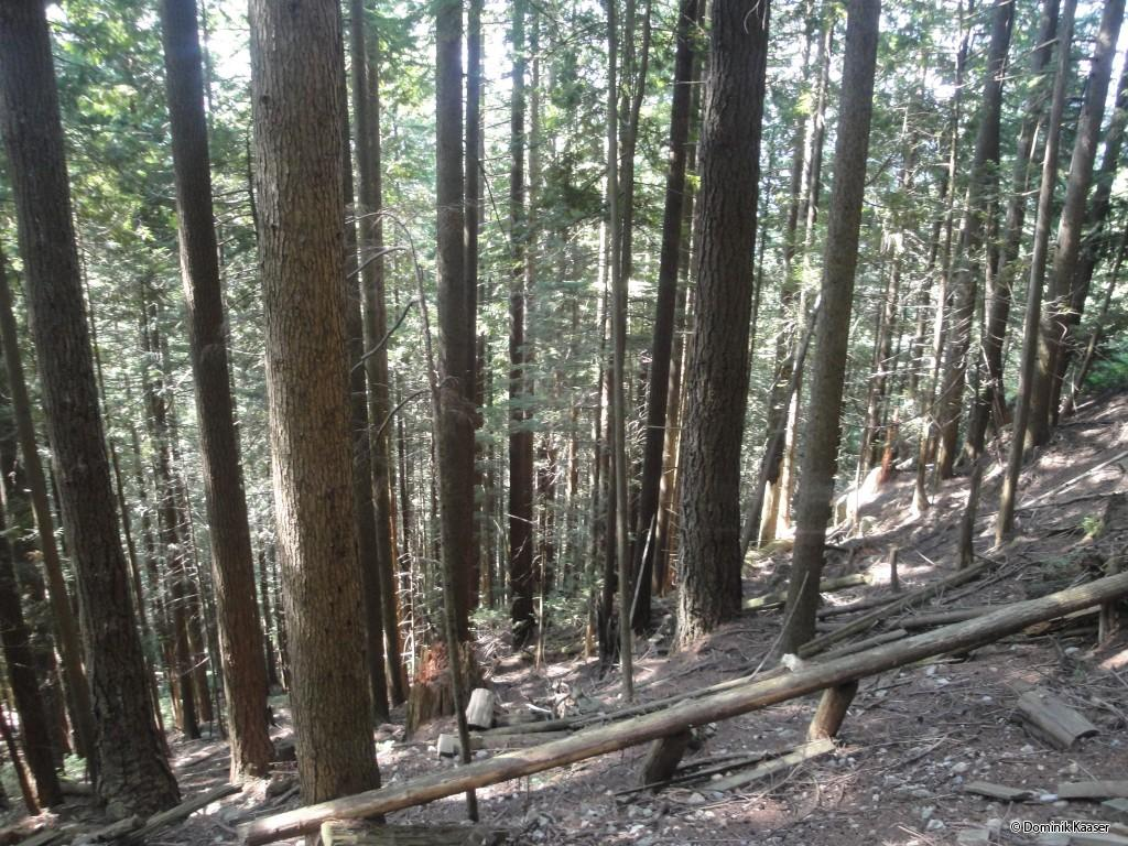 Walking up the Grouse Grind